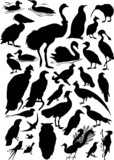 thirty one bird silhouettes poster
