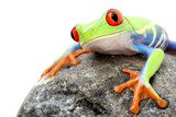 Fototapete Laubegg - Agalychnis callidryas - Reptilien / Amphibien
