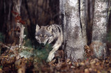 Fototapete Tier - Natur - Säugetiere