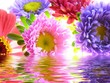 bunch of asters reflected in water