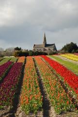 ligne de tulipe et chapelle
