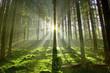 Leinwanddruck Bild - Wald im Gegenlicht