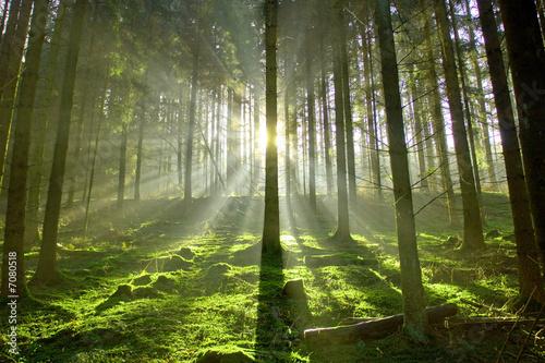 Leinwanddruck Bild Wald im Gegenlicht