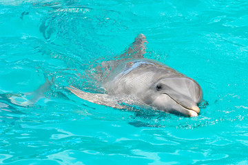 Dolphin  happy swimming in water