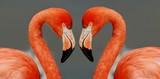 Fototapeta miłość - para - Ptak