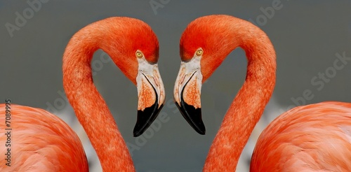 Fotobehang Flamingo couple de flamants 2