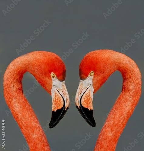 Foto op Aluminium Flamingo couple de flamants