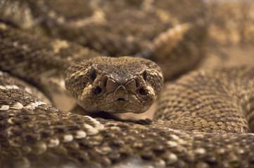 snake shot in terrarium