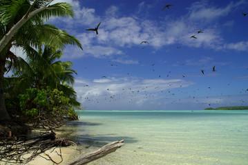 Oiseau survolant le lagon dans le pacifique