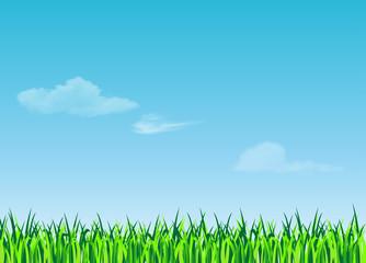 erba e cielo
