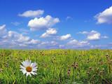 Fototapeta niebo - pole - Ogólny widok