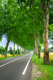 Fototapety French country road