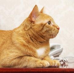 Red cat online