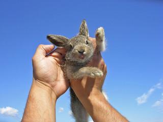 Little hare.