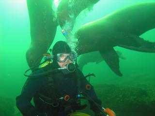 Scuba Diver with California Sea Lions