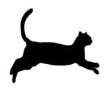Gato saltando poster