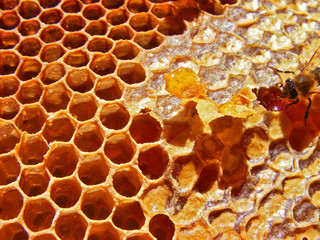 honey hexagons