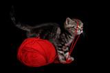 chat chaton jouer amuser animal bébé jeux pelote poster