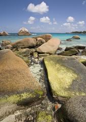 Boulders with Algae