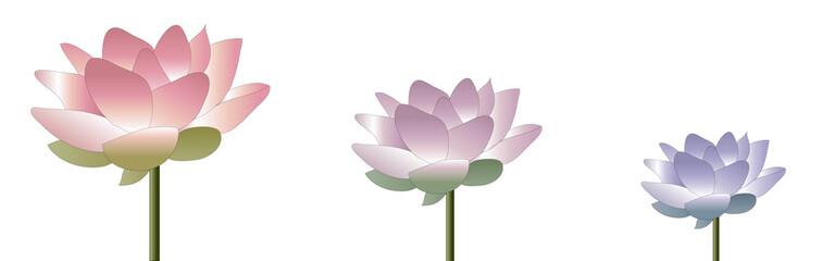 Bannière Lotus