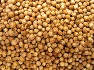Coriander dried seeds