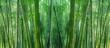 Leinwandbild Motiv asian bamboo