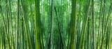 asian bamboo