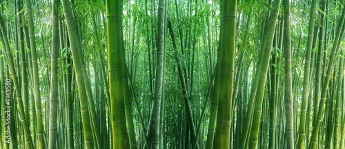 asian bamboo - 7163580