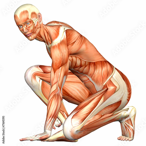 Male Body Anatomy Diagram Male lt b gt Human Body Anatomy lt b gt