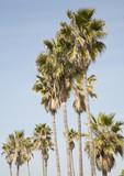 Palm Tree Grove poster