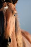 Fototapety Horse Portrait