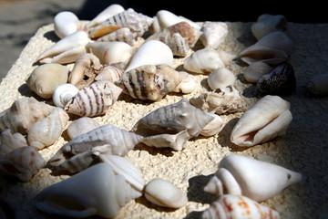 Shells. 2