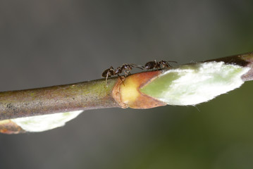 Close up of an ant.