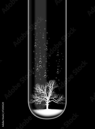 Tree in test tube