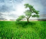 tree - 7213134