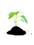 growing plant green and soil poster