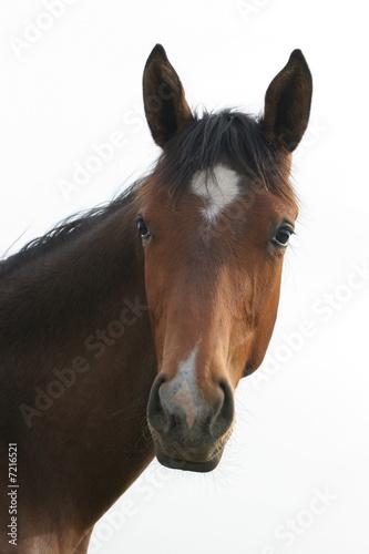 Fototapeten,pferd,pferd,pferd,pferd
