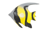 Fish magnet poster