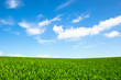background of cloudy sky and grass.
