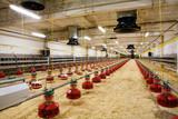 poultry farm poster