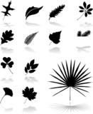 Fototapety Set icons - 26. Leaves. Set of twelve vector icons