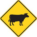 Cattle traffic warning on white poster
