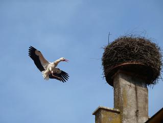 Storchenflug
