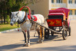 dappled horse in red gear with a russian tradition wagon