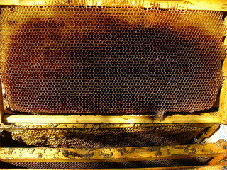 honey background 1