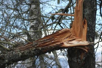 tronco di albero spezzato