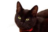 Isolated Feline Portrait poster