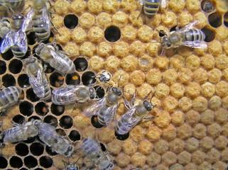 Birth of bee.