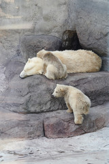 mother white bear with 2 children