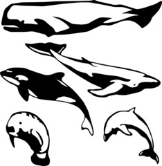 5 stylized vector illustrations of marine mammals
